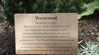 Wormwood properties, Medicine Garden -  Elizabeth Park, West Hartford, CT