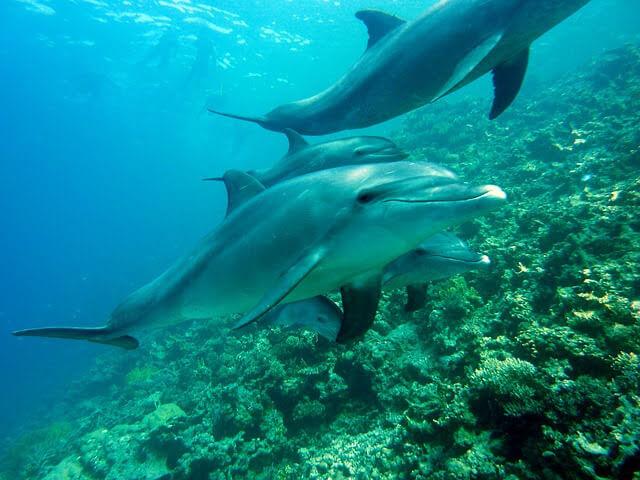 海の中でイルカが泳いでいる写真