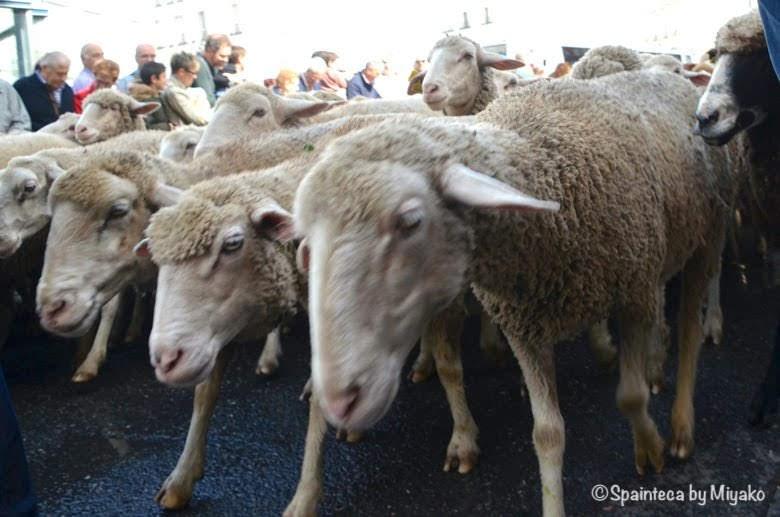 Fiesta de la Trashumancia Madrid  マドリードのトラスウマンシア祭り