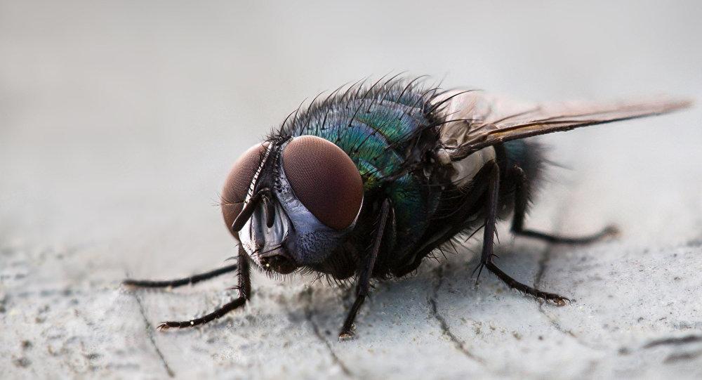 Cómo identificar y eliminar la larva de las moscas