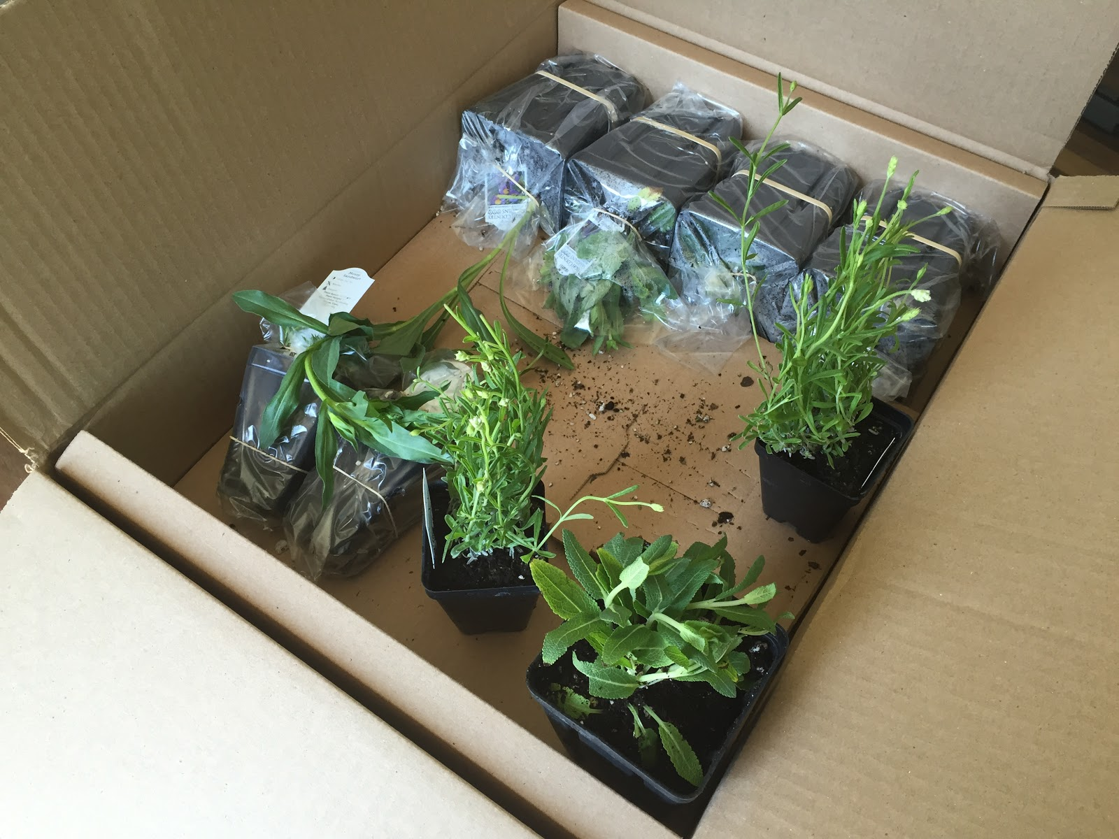 order plants by mail