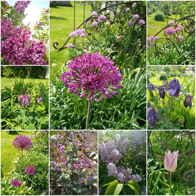 Lila Blumen im Mai - Purple Flowers in May