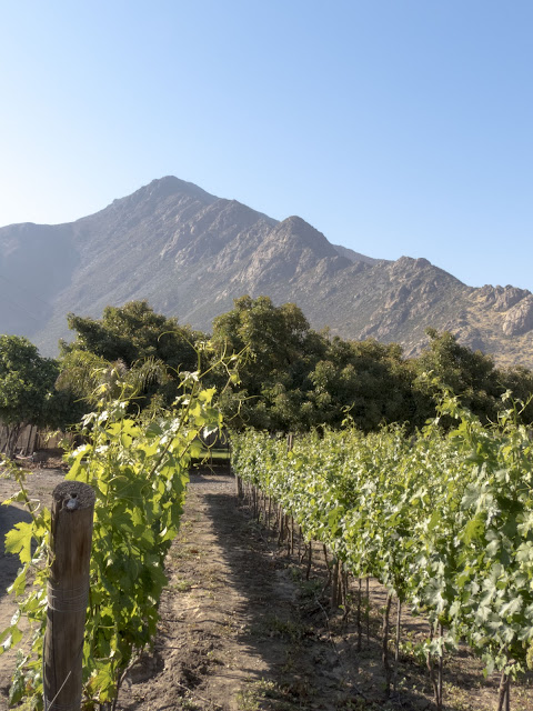 Day trips from Santiago Chile: Aconcagua Valley wineries