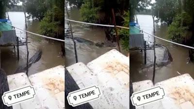 Heboh Kemunculan Buaya di Banjir Wajo dan Soppeng, Ternyata Ini Fakta Sebenarnya