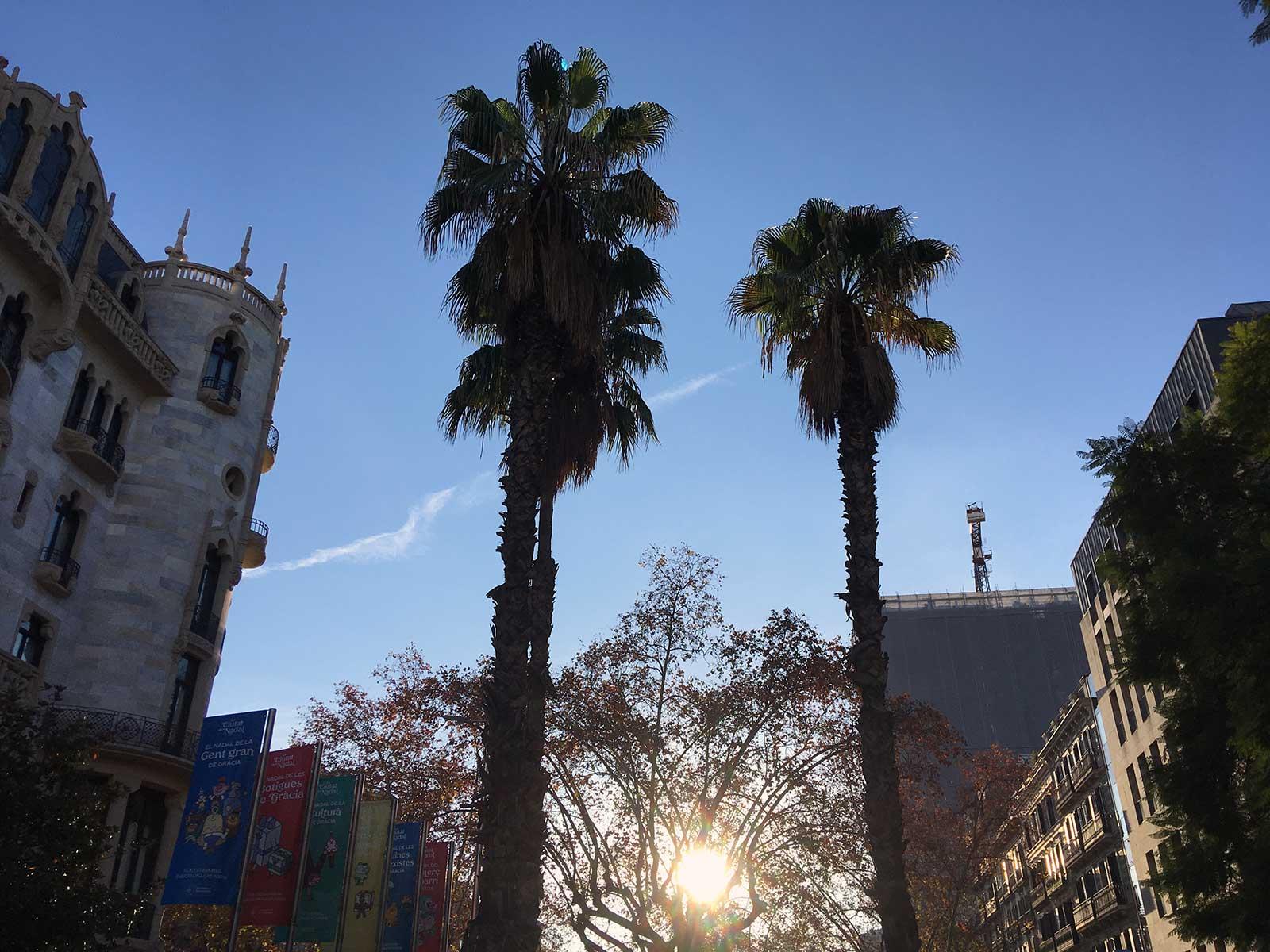 Palmeras en Mayor de Gracia. Barcelona, 21 diciembre 2020