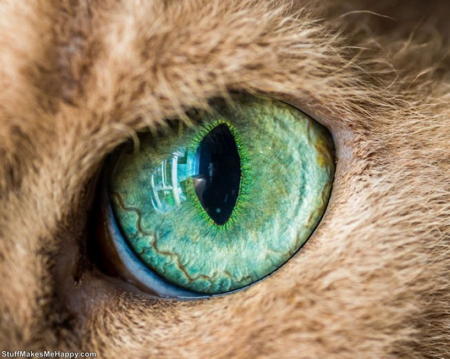 Wonderfully Hypnotic Macro Photographs of Cats' Eyes by Photographer Andrew Marttila