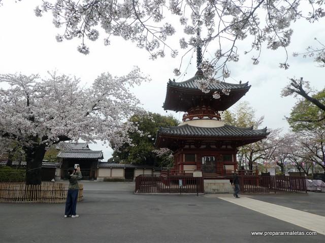 cerezos en flor en Kawagoe
