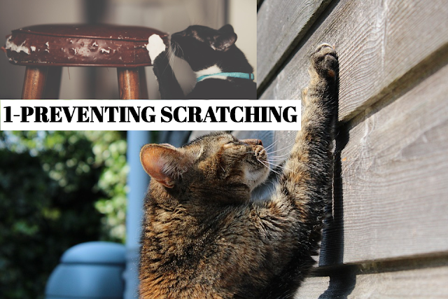 preventing-scratching