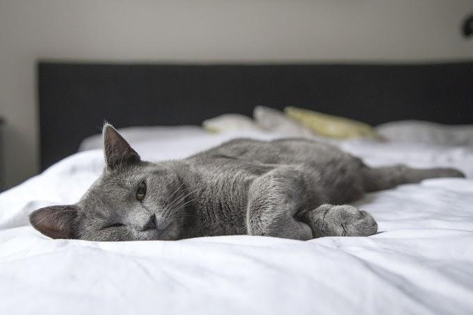 Comment aider votre chat timide à se sentir plus à l'aise