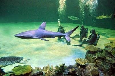 Aquário Shark Reef em Las Vegas