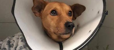 hoyennoticia.com, Por abuso sexual falleció perro en Risaralda