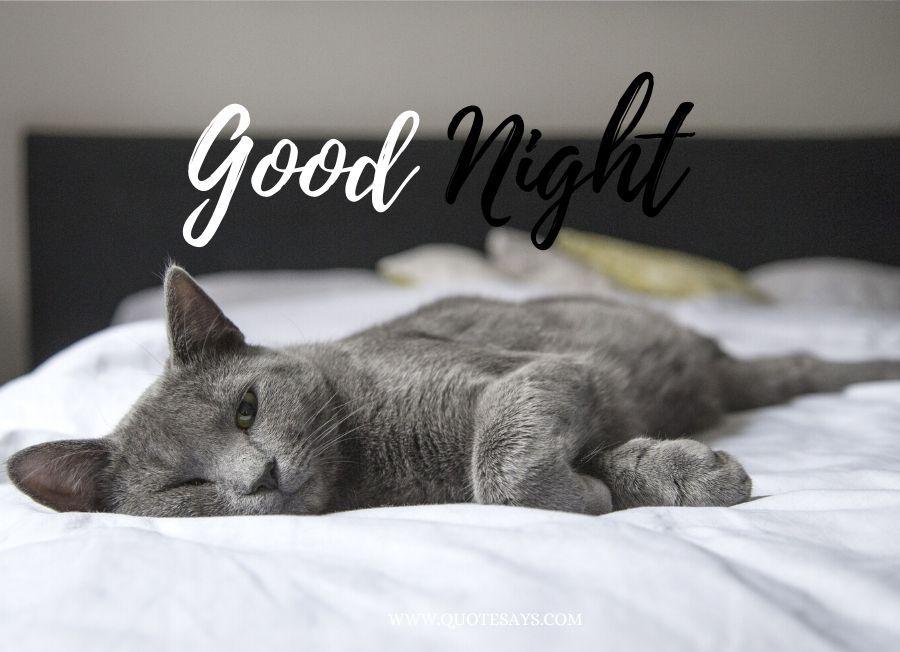 Good Night Black Cat sleeping on the bed