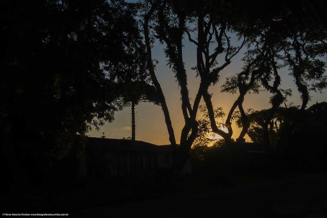 O sol no final da tarde por trás de alguma árvores