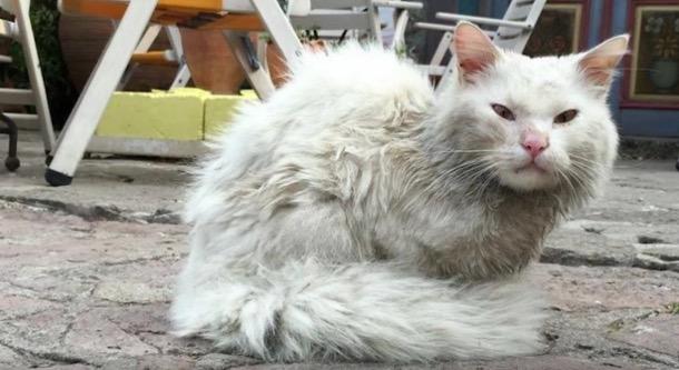 Pertemuan Semula Kucing Dengan Tuannya Buat Ramai Menangis