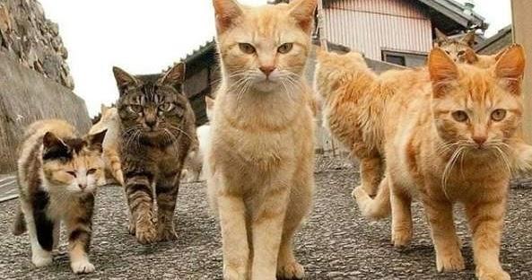 Pesona Kucing Kampung 3835 Info