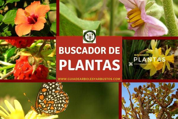 Buscador de plantas en guía de arboles y arbustos para el bosque de alimentos