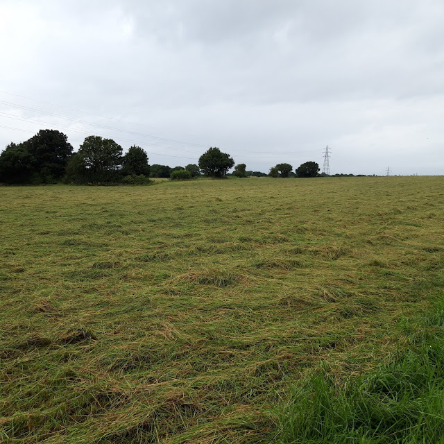 A farmer's field with a line of trees in the background and cut grass ready for baling in the foreground and reaching all the way to the trees
