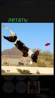 389 фото собака летит и хочет поймать тарелку в воздухе 2 уровень