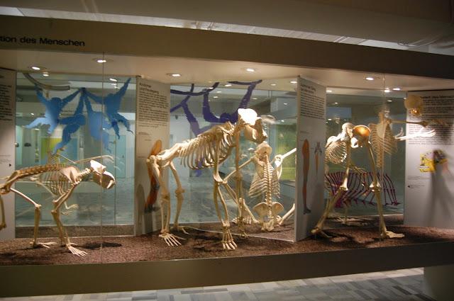 متحف سينكنبرج