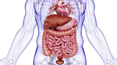 أعراض الزائدة الدودية  وأسبابها