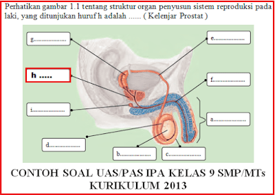 Soal UAS/PAS IPA Terpadu Kelas 9 SMP/MTs Plus Jawaban Semester 1/ Ganjil Kurikulum 2013