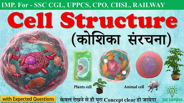 Cell-structure