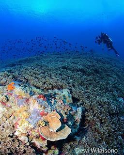 Dive Site Lava Flow, Kepulauan Banda, Maluku Photo by @dwilaisono