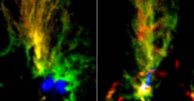 ALMA images of two molecular clouds: N159E-Papillon Nebula (left) and N159W South (right). Red and green show the distributions of molecular gas with different velocities mapped by 13CO emissions. The blue region in N159E-Papillon Nebula shows the ionized hydrogen gas observed with the Hubble Space Telescope. The blue part in N159W South shows the emissions from dust particles obtained with ALMA. Credit: ALMA (ESO/NAOJ/NRAO)/Fukui et al./Tokuda et al./NASA-ESA Hubble Space Telescope