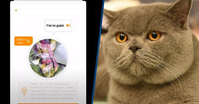 Kedilerin Miyavlarını Çeviren Yeni Bir Uygulama Geliştirildi