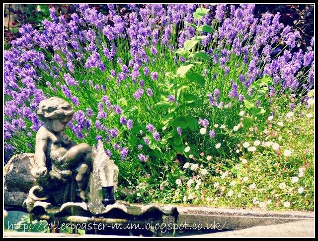 Lavender by the fountain