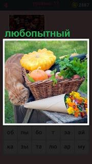 на скамейке любопытный кот пытается залезть в букет цветов