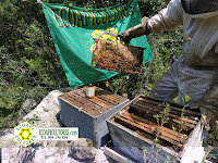 miel sin glifosato ecoapicultores ecopai