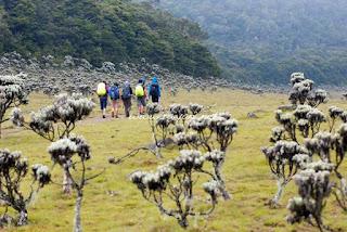 5 Gunung Terbaik Dengan Pemandangan Padang Bunga Edelweis
