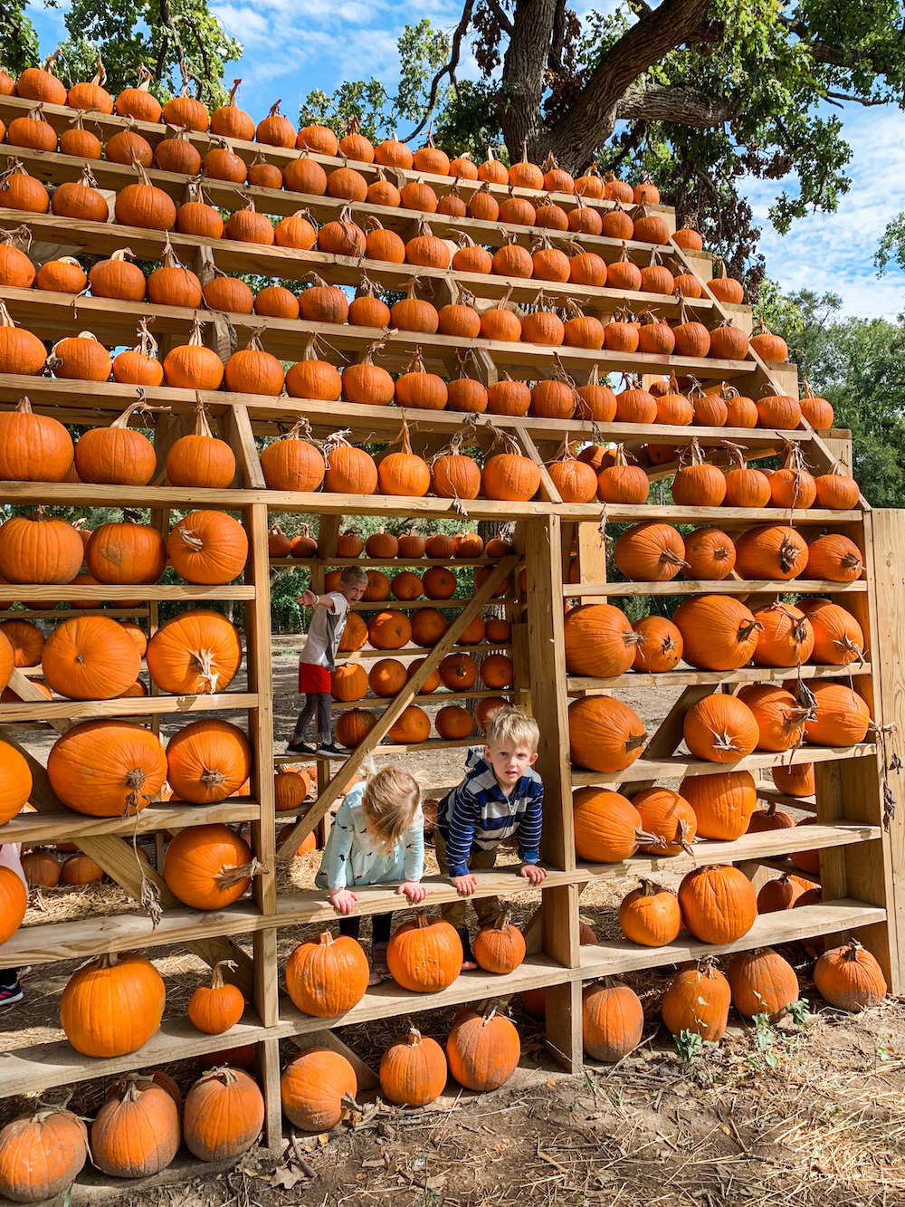 Austin pumpkin patch, Austin pumpkins, Austin fall fest, Georgetown Texas, Georgetown pumpkin patch, north Austin pumpkin patch, sweet eats fruit farm, sweet eats pumpkin patch, sweet eats fruit farm, round rock pumpkin patch, Georgetown pumpkin patch, sweet eats farm, Jesse Coulter blog, Texas travel blog, Texas travel blogger, Austin family blog, Austin mom blog, Austin mom blogger, Texas mom blogger, Austin kid activities