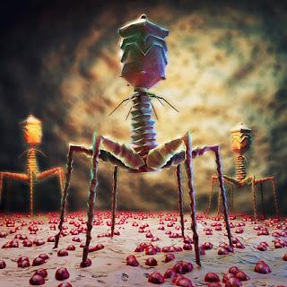 БактериОфаги  Бактериофаг вирус древний
