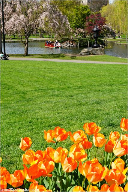 Boston Public Garden en Primavera