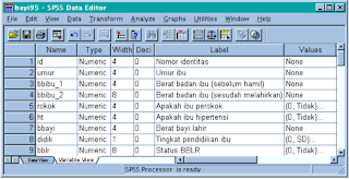Variabel View di SPSS