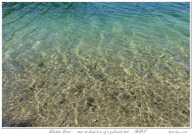 Walden Pond: ... near at hand it is of a yellowish tint... HDT