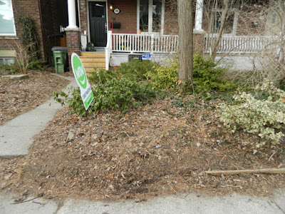 Riverdale Spring Front Yard Cleanup Before by Paul Jung Gardening Services--a Toronto Organic Gardening Company