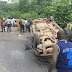One dead, 11 injured in Ogun auto crash
