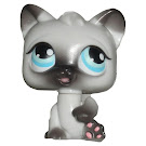 Littlest Pet Shop Large Playset Kitten (#PP1) Pet