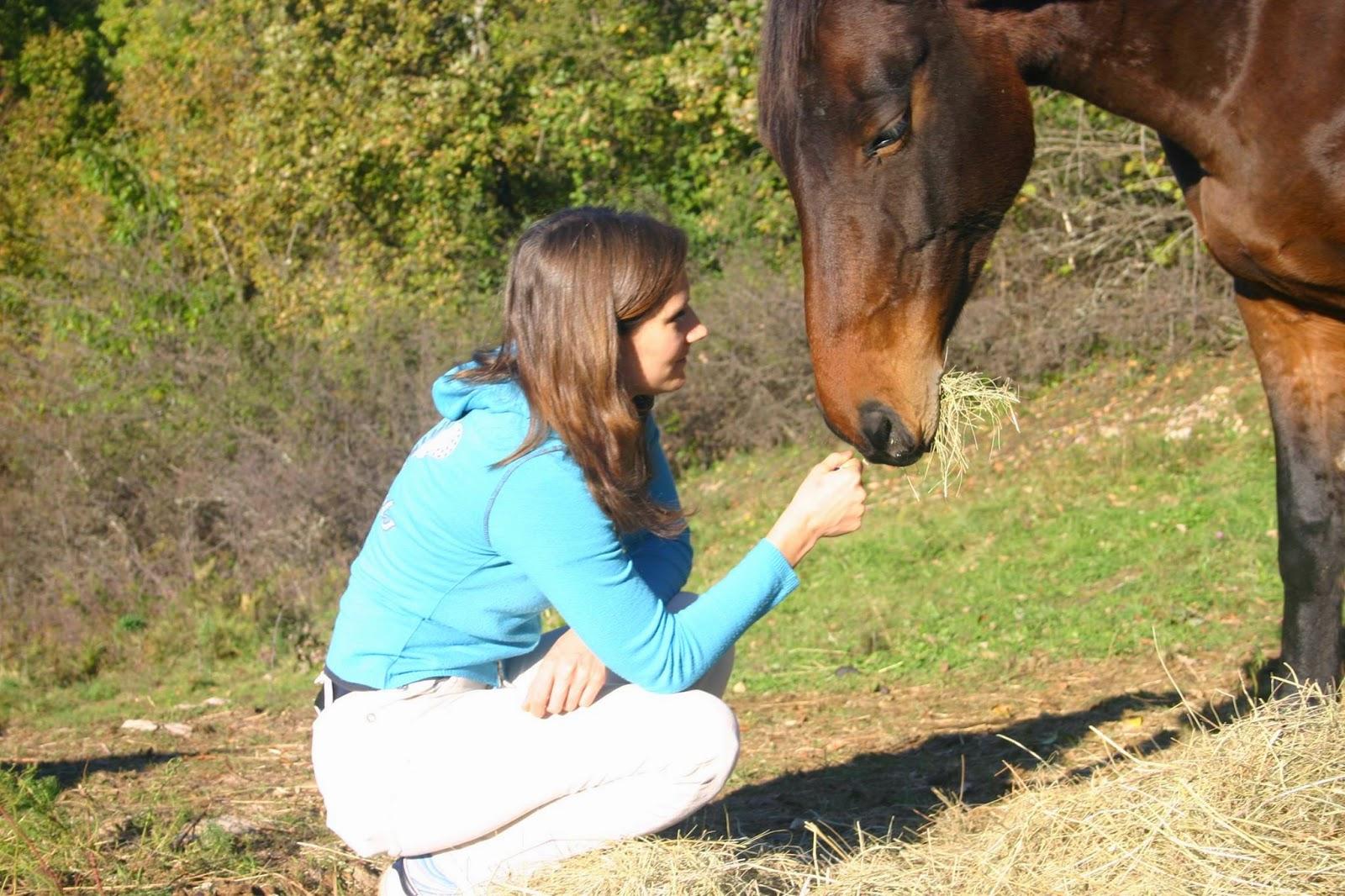 besitzer tötet pferd