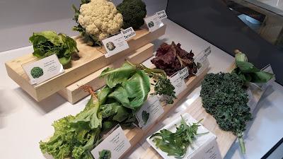 sayuran organik SESA Indonesia