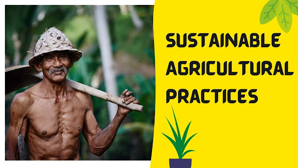 Sustainable Agricultural Practices india