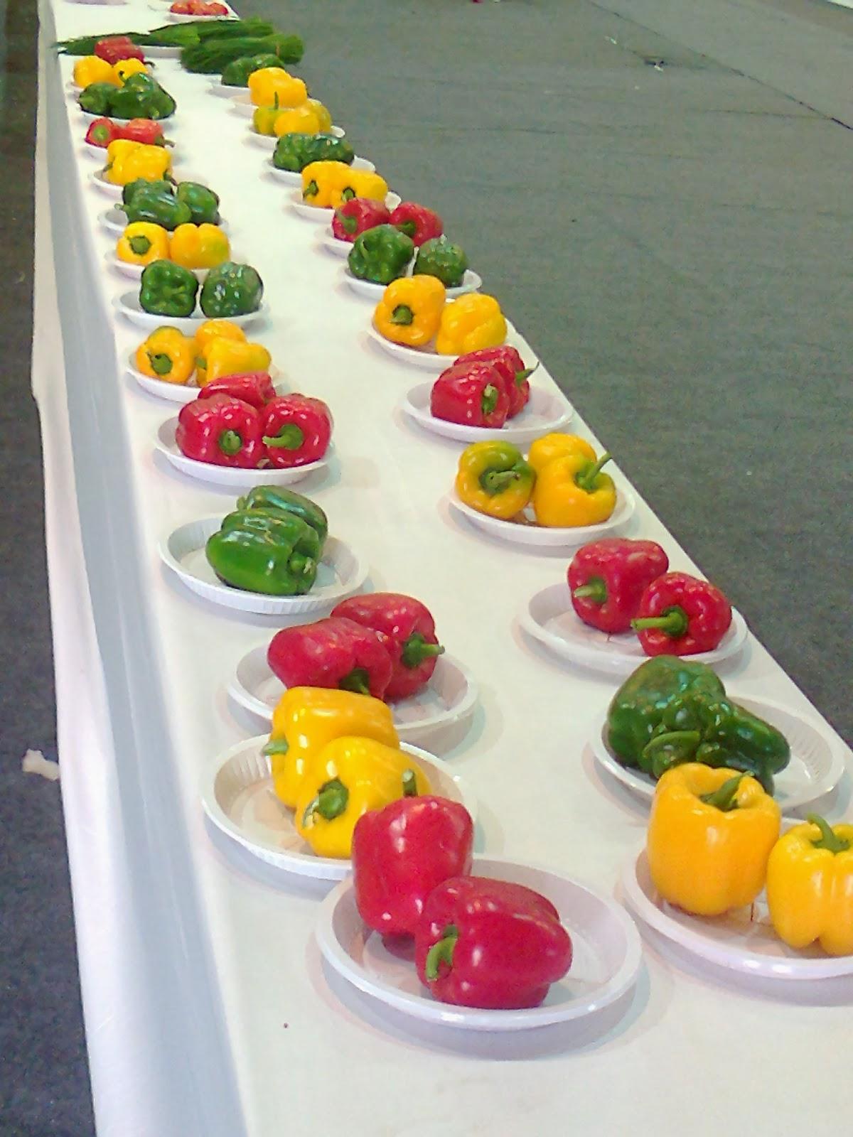 capsicum chili hybrid variety