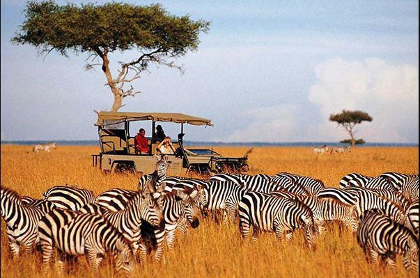 Summer holidays 2021:Kenya
