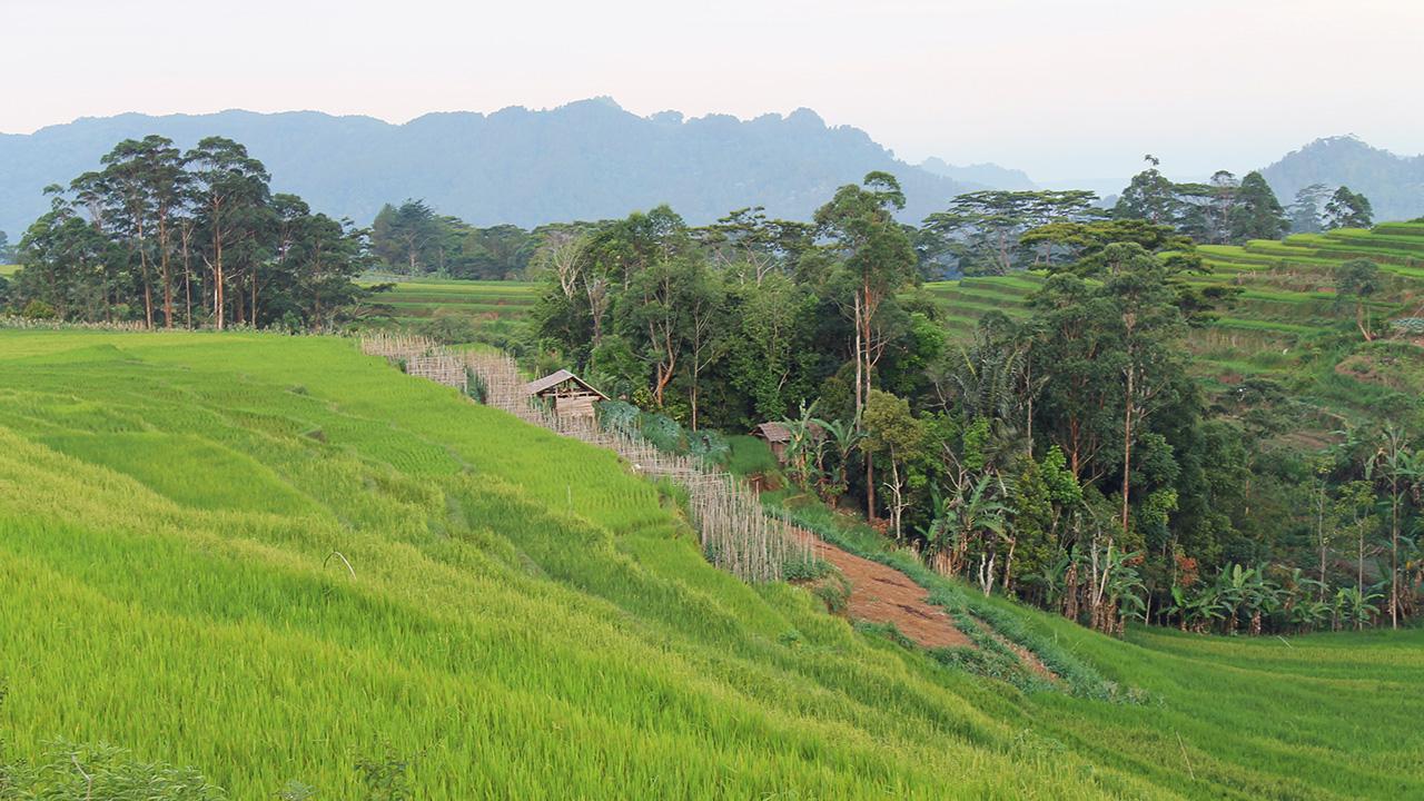 Fotografi Landscape  sawah di Sinjai Sulawesi Selatan