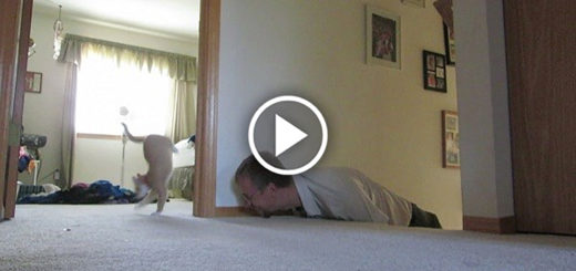 Adorable Kitten Plays Hide n' Seek With Her Loving Human!