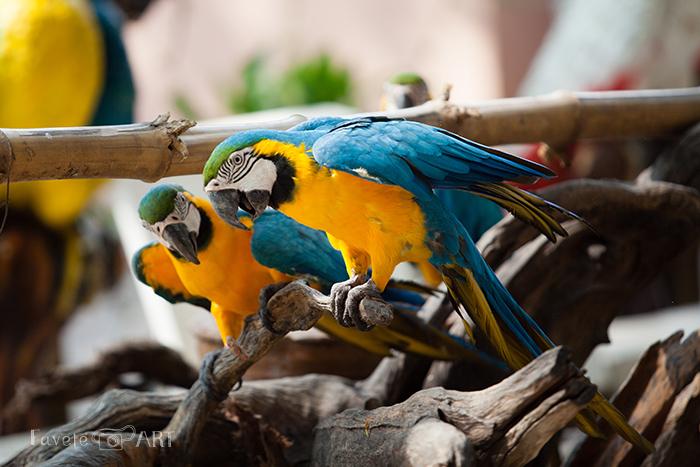 Разноцветные попугаи в сафари-парке Канчанабури