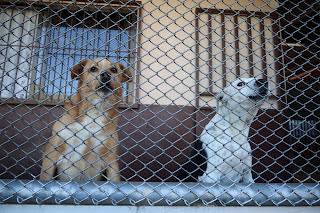 dogs in Santiago de Puriscal